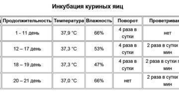 Инкубация цесарок: особенности подготовки инкубационных яиц, таблица оптимальной температуры, нормы режима инкубации