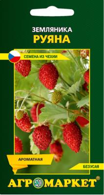 Особенности выращивания клубники сан андреас