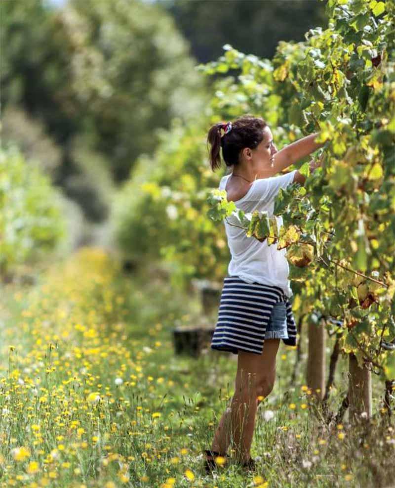 Уход за плодоносящими кустами винограда