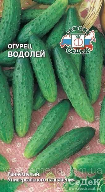 Сорт огурцов «водолей»: фото, видео, описание, посадка, характеристика, урожайность, отзывы