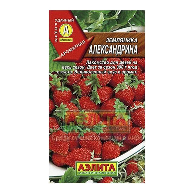 Земляника александрия – вкус и аромат счастья