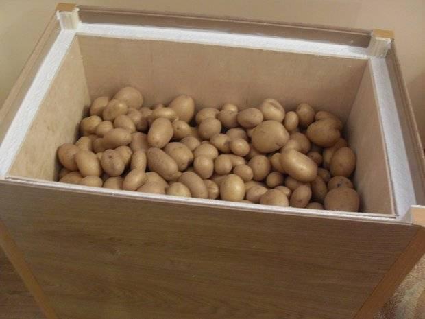 Температура, влажность, освещенность и другие требования для хранения картофеля зимой