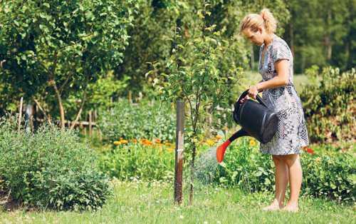 Как правильно и когда поливать яблони весной