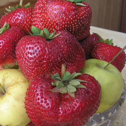 Сорт сенсация: клубника со вкусом персика