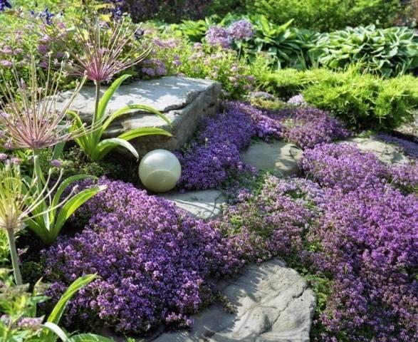Какие цветы-многолетники посадить на даче, чтобы цвели всё лето (с фото)