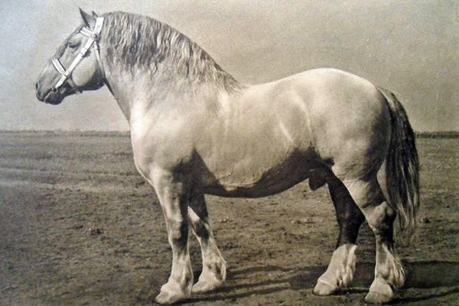 Самые быстрые лошади в мире 2020