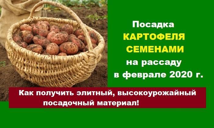 Как вырастить самый ранний картофель – два простых варианта на выбор!
