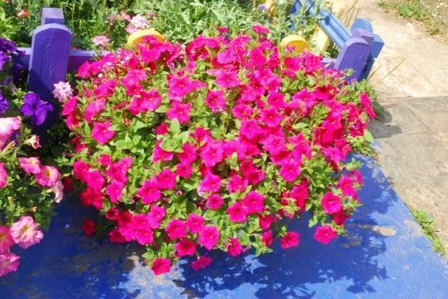 Комплиментуния f1 – комплимент на языке цветов