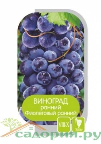 Сорт винограда ранний фиолетовый — особенности выращивания
