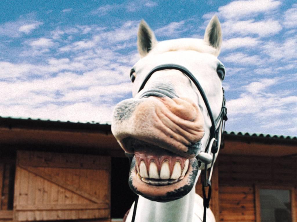 Лошадь мерин - это кастрированный жеребец со спокойным характером
