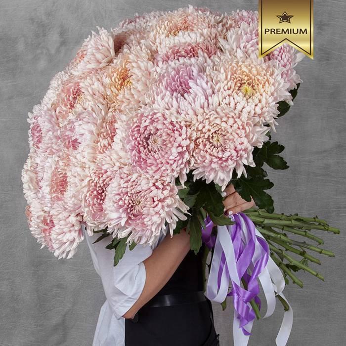 Крупноцветковые хризантемы: секреты выращивания