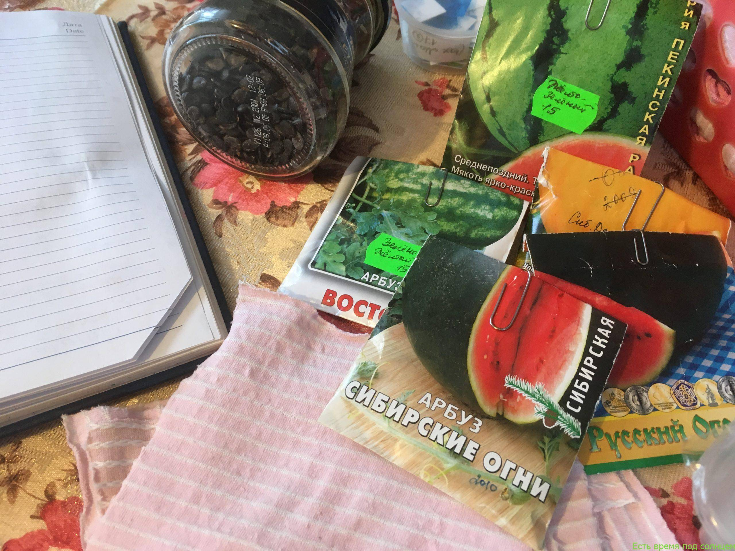Замачивание семян огурцов перед посадкой