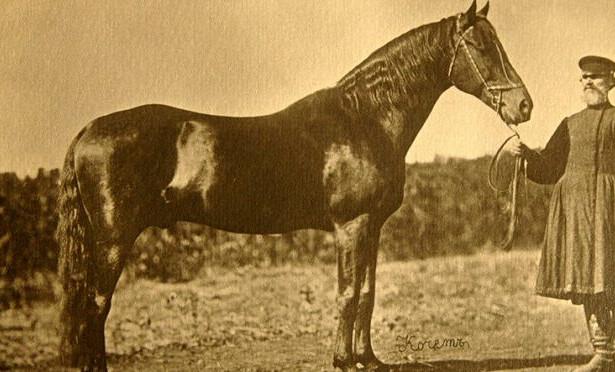 Орловский рысак: описание, история породы