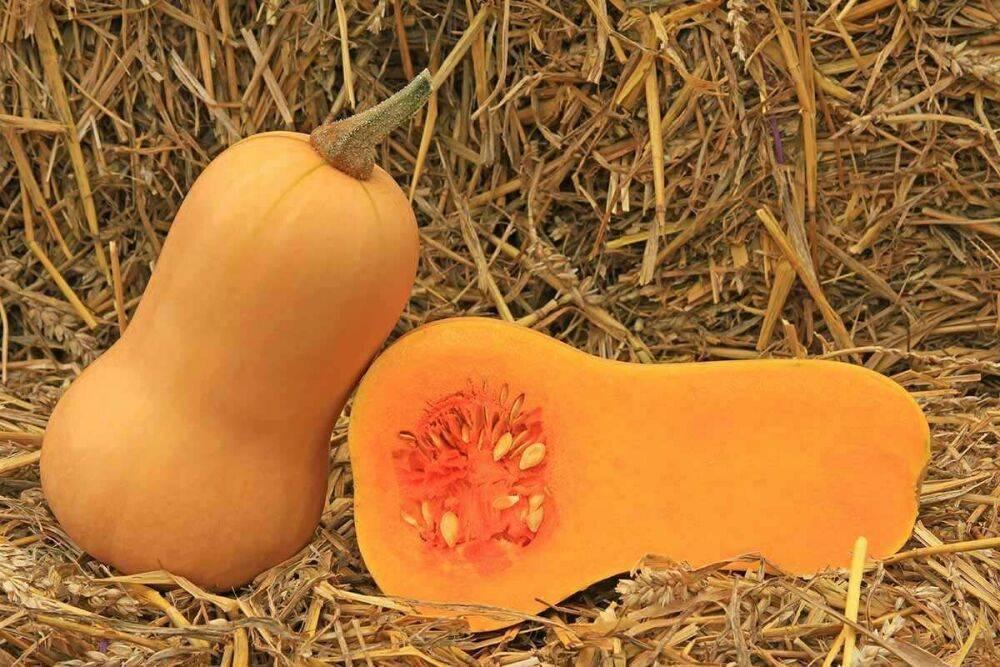 Полезные свойства тыквы баттернат или мускатной тыквы