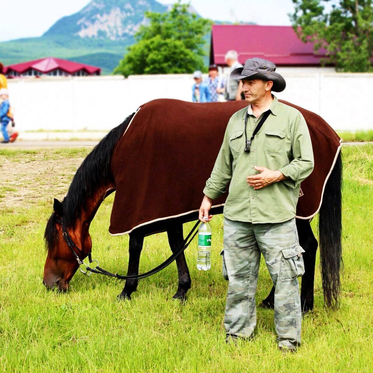 Кавказские жемчужины – описание лошадей карачаевской породы