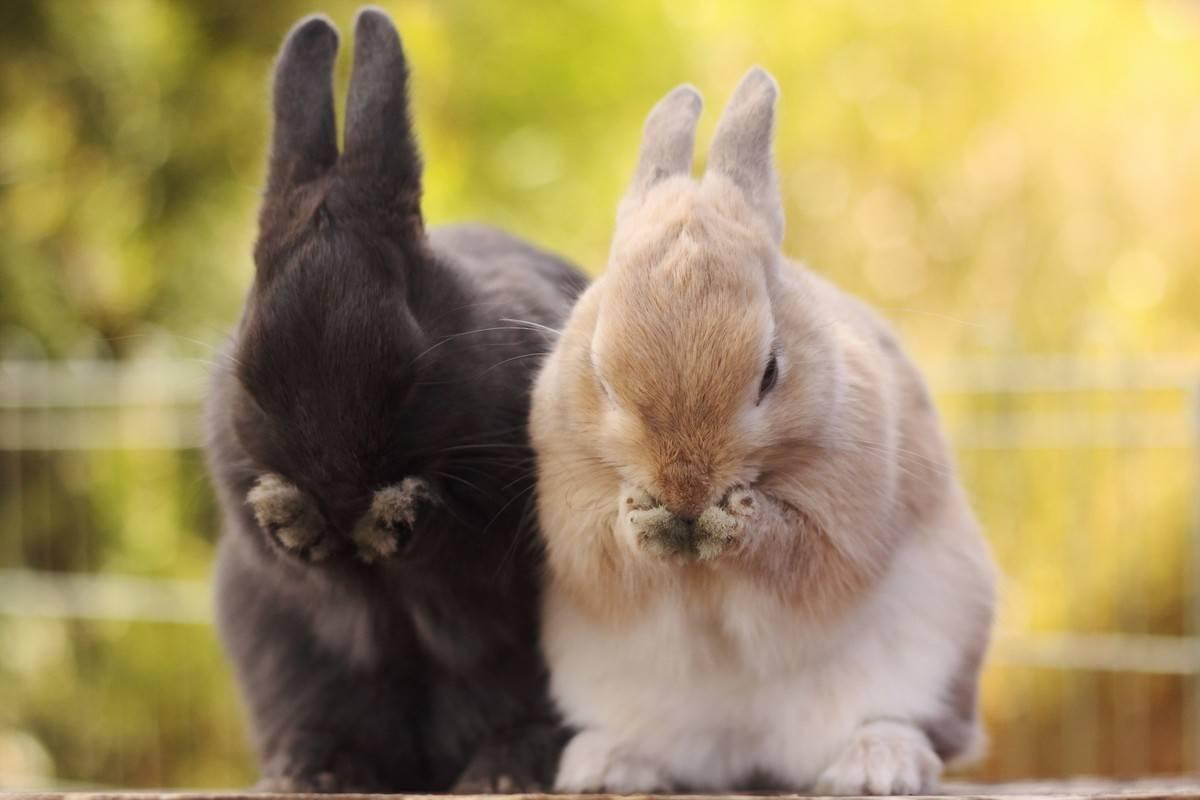 У кролика хочуха!