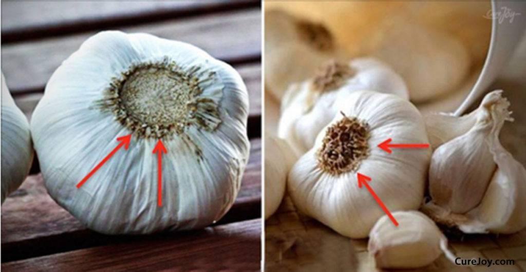 Как сделать китайский чеснок полезным. как отличить китайский чеснок от российского: почему отечественный чеснок менее вреден? как выглядит на фото