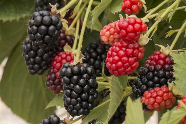 Посадка плодовых деревьев и кустарников