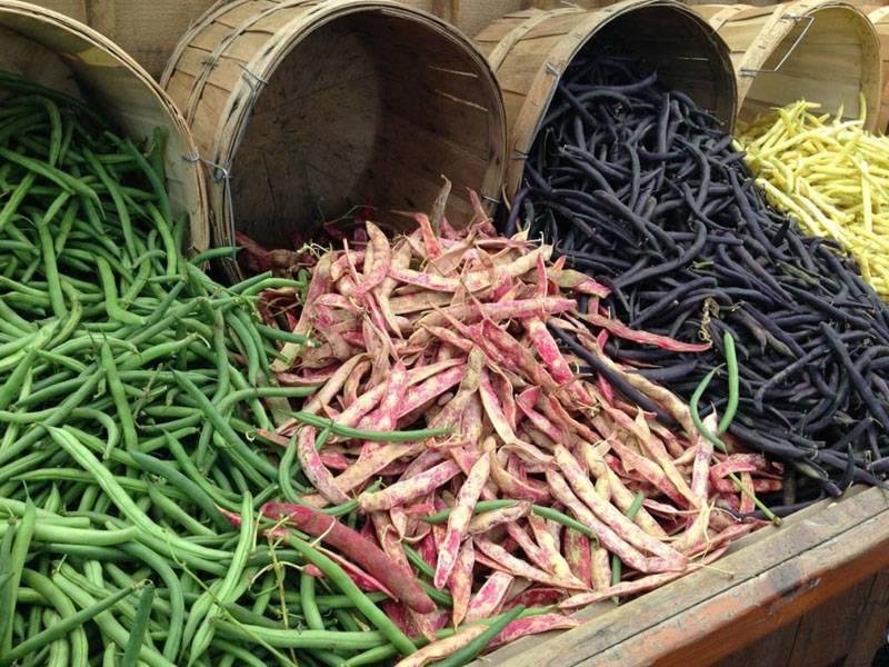 Сорта и разновидности фасоли, популярные у садоводов