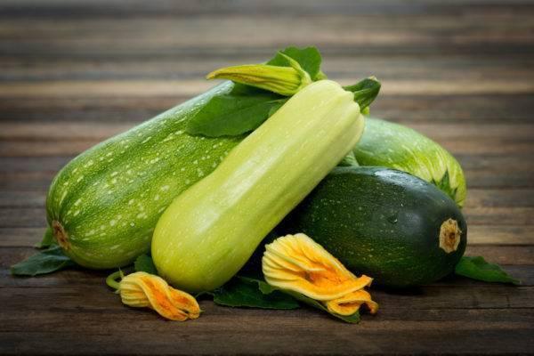 Кабачки в открытом грунте – как вырастить полезные овощи на участке?