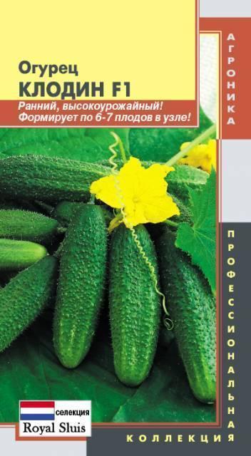 Об огурце Клодин: описание сорта, характеристики, технология выращивания