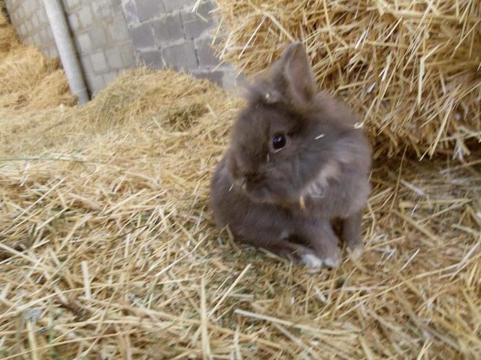О декоративных кроликах: характер, как приручить к рукам, как спят, разведение