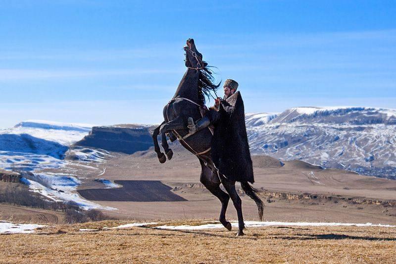 Карачаевская порода лошадей — описание, фото, история, характерные особенности