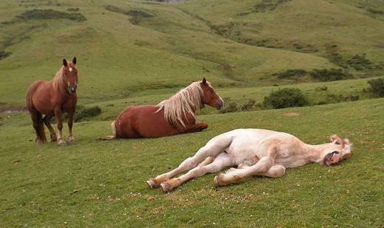 Сон лошадей или как спят скакуны