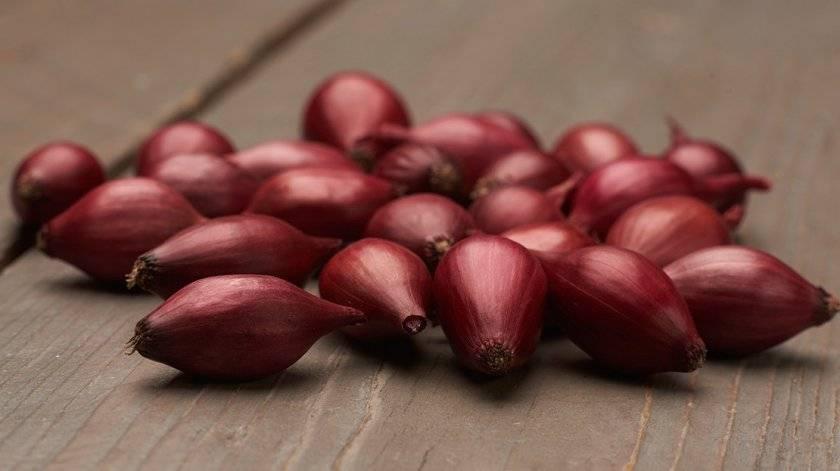 Красный лук: польза и вред для здоровья