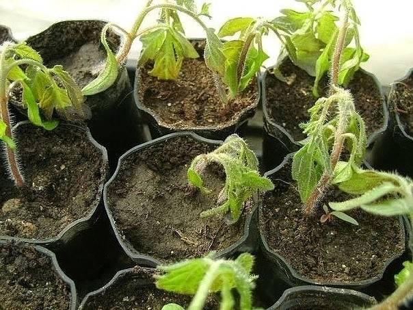Эпин для растений – удобрение или стимулятор роста. состав и принцип действия. сроки и правила обработки