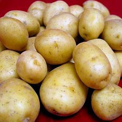 Сорт картофеля «фермер» – описание и фото
