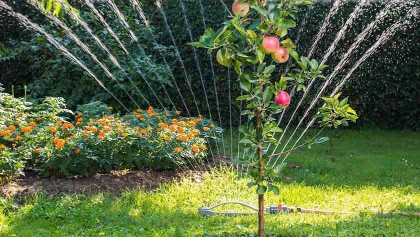 Когда нужно удобрять плодовые деревья в саду — сроки и правила