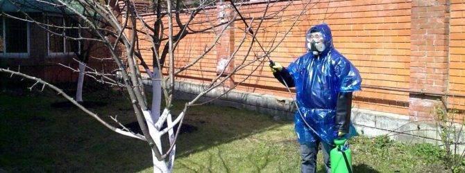 Чем обработать сад от болезней и вредителей весной и летом