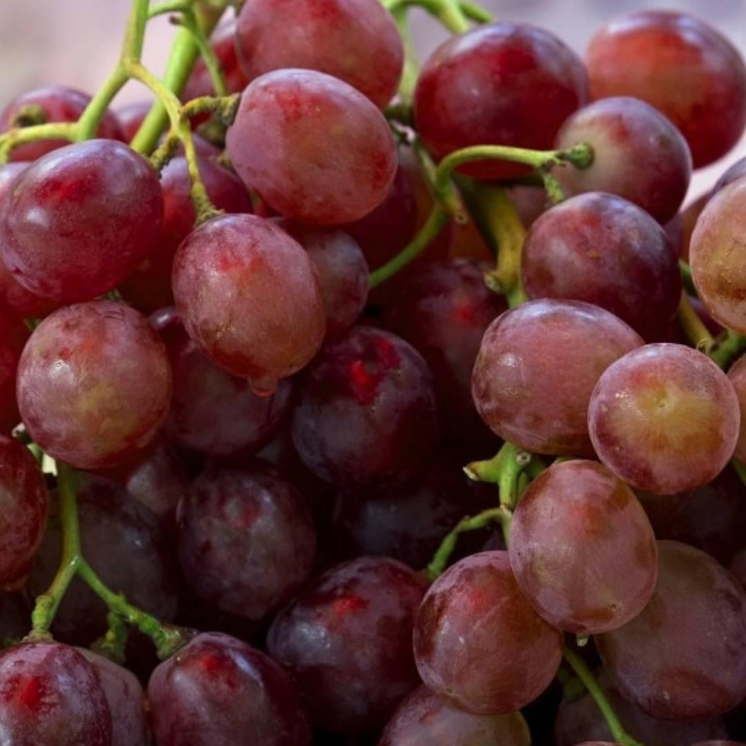 Описание винограда кардинал