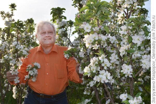Как бороться с червивыми яблоками и когда опрыскивать, правила обработки