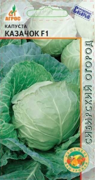 Посадка капусты «слава». чем привлекателен белокочанный сорт и как его выращивать?