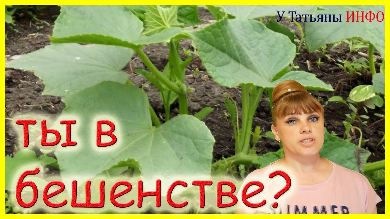 Актуальная информация что делать, если плохо растут огурцы в теплице