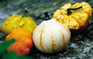 Все, что вы хотели знать о декоративных тыквах