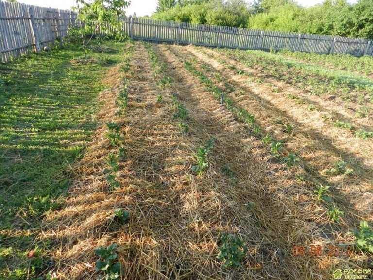 11 способов посадить картофель и получить высокий урожай