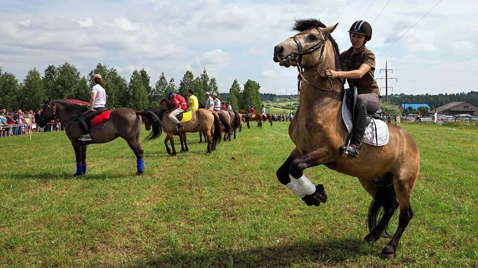 Распространенные породы и виды лошадей тяжеловозов