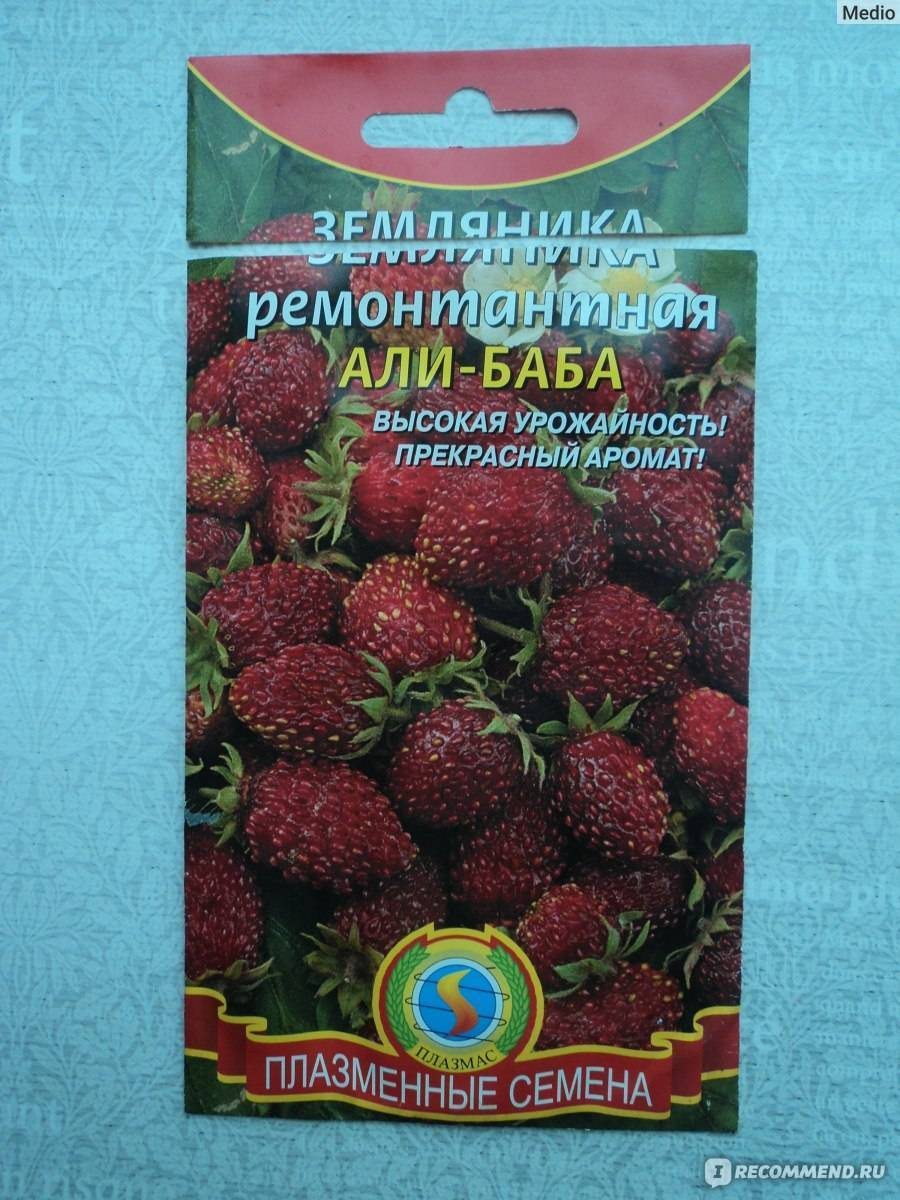 Земляника али-баба: выращиваем душистую ягоду в саду - общая информация - 2020