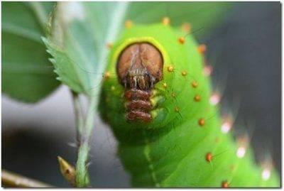 Опрыскивание яблонь весной от болезней и вредителей