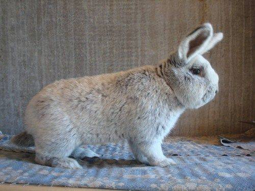 Породы кроликов: описание с фотографиями, особенности содержания и самые популярные в мире разновидности