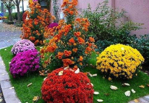 Цветы для клумбы цветущие все лето низкорослые   красивый дом и сад