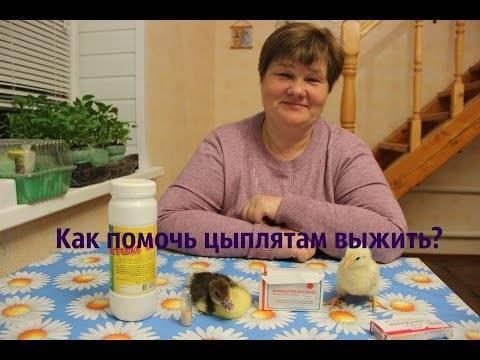 О тетрациклине для цыплят, бройлеров, кур: как разводить (дозировка с водой)