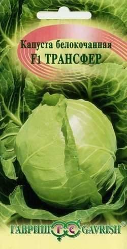 Сорта капусты | россельхоз.рф