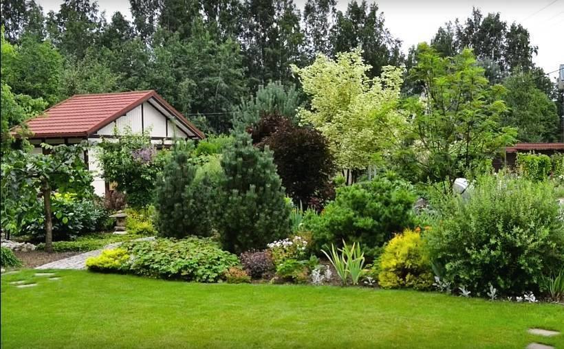 Декоративные деревья и кустарники – как правильно посадить