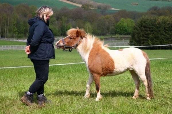 Вся информация о породах маленьких лошадей