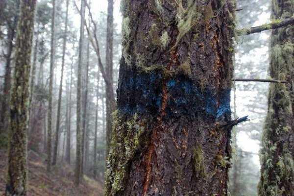 Чем можно полить дерево чтобы оно погибло