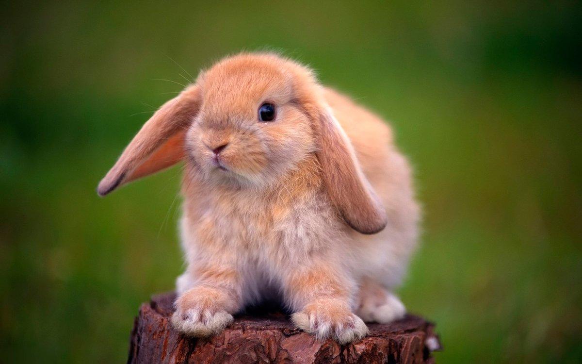 Почему кролик стучит лапами
